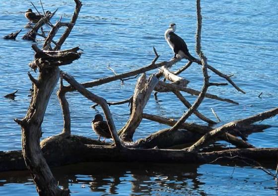 Lake Rotoroa Hamilton