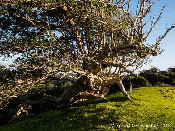 Mahurangi Regional Park Auckland