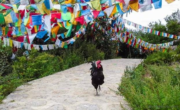 Chicken at Baiji Temple