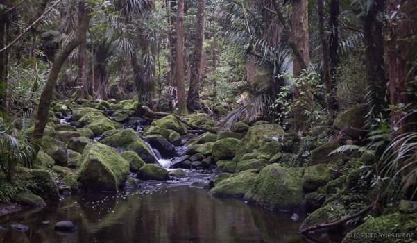 Waikoromiko Stream in A H Reed Memorial Park Whangarei