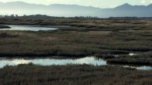 Saltmarsh and swamp - I mean wetland.