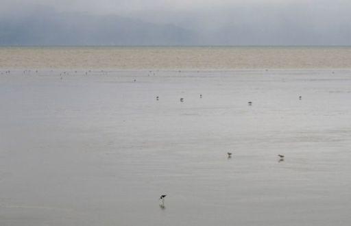 Ray's Rest - Seabird Coast near Kaiaua