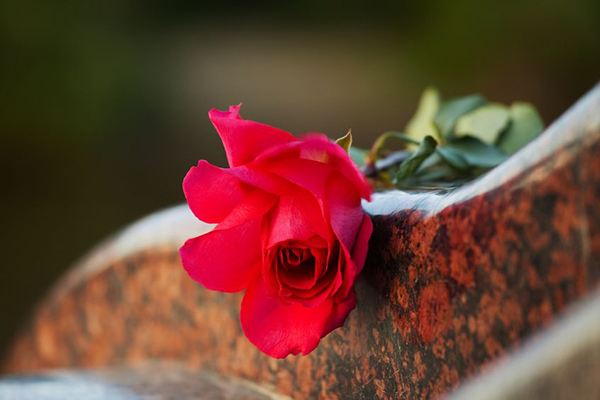 9377814 - rose on the tombstone