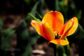 Biltmore Estate spring-3267-Edit