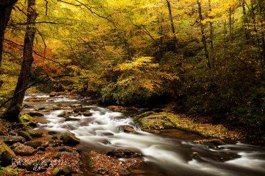 Pure Autumn 14