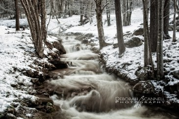 Snowy Covered Stream