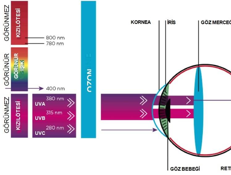 UV ışınlarının zararları