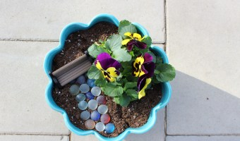 Bloom a Smile with this DIY Tooth Fairy Garden