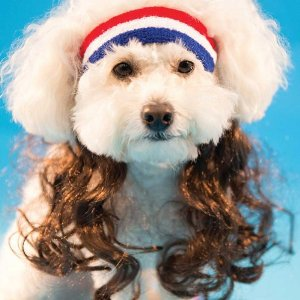 The All-American Dog Mullet Hairband... yes it's available on Amazon