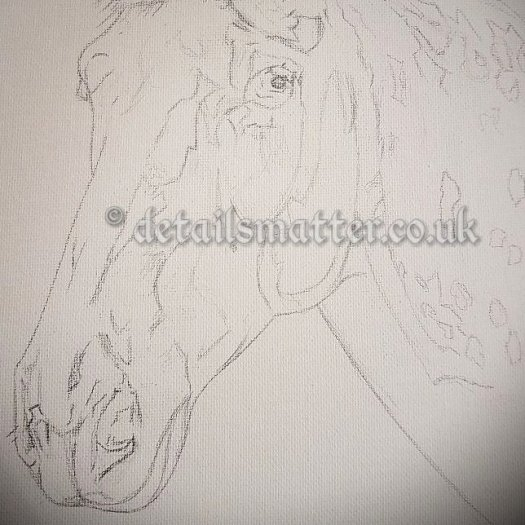 Pencilled in horses head on white canvas