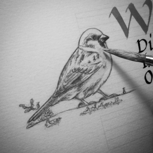 Starting to paint a Sparrow sketch