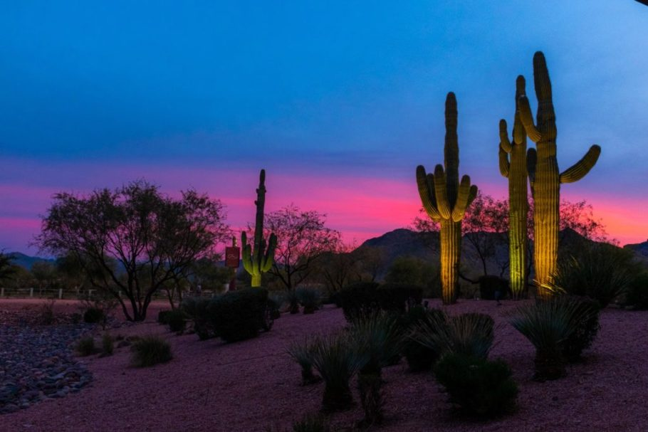 A pink and blue Arizona sunset with cacti in the foreground