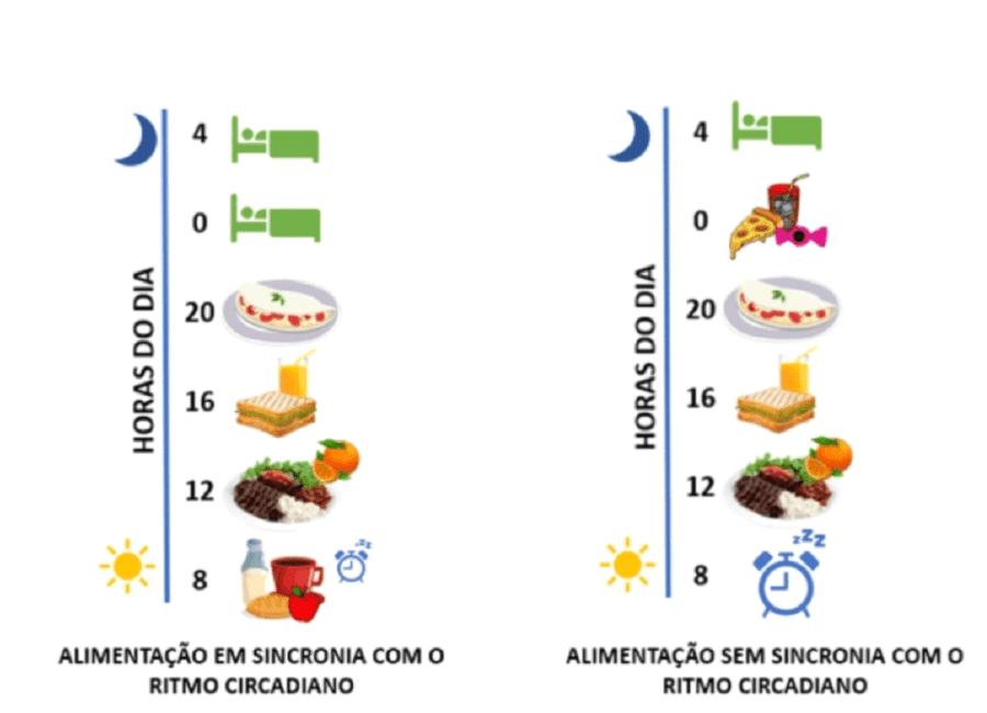 alimentação e ciclo circadiano