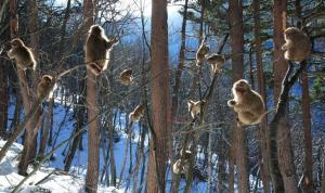 Business Monkey Trees