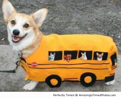 Bus-Custume-for-dog-resizecrop--