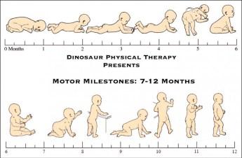 motor milestones infants: 7-12 months