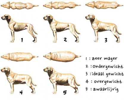 Overgewicht bij de hond