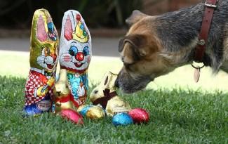 hond en paaseieren