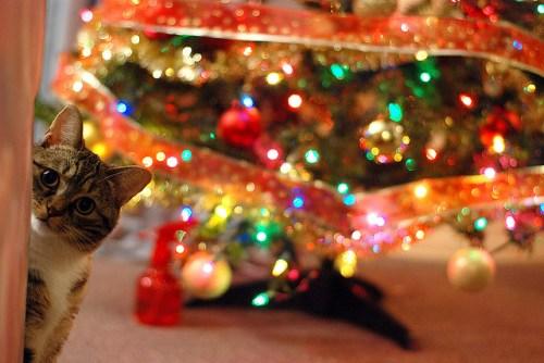 kat kerstboom