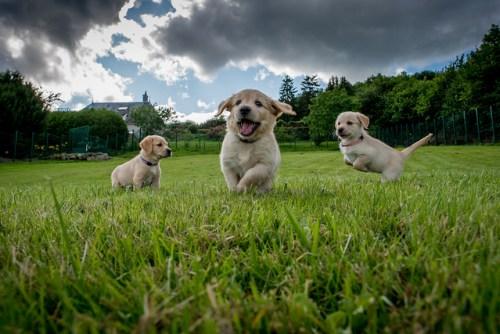 puppy spel