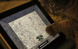 Chat jouant avec un iPad