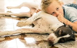 chien, enfant et allergie