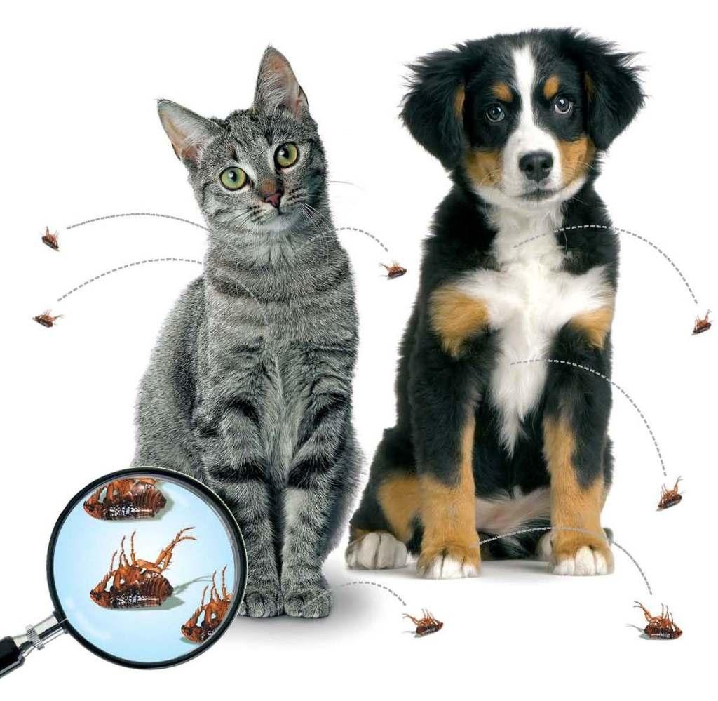 Tiques et puces chiens et chats