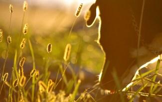 chien mange herbe