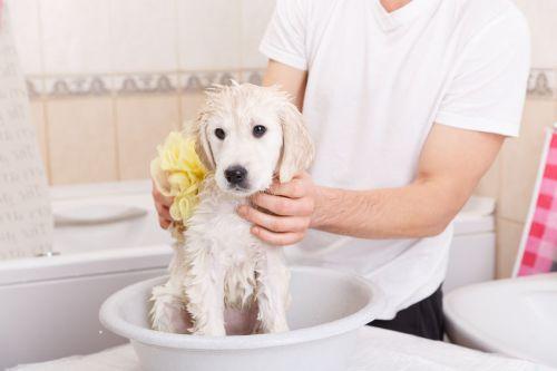 laver son chiot