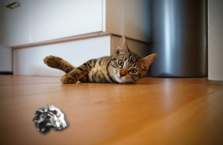 jeux pour chat avec boule de papier