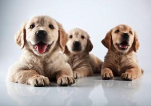 img-mg-pets-dog_172251356054