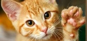 Antiparasitaire toxique chez le chat