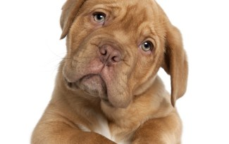 choisir un nom de chien