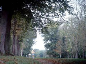 Parc de Saint Cloud - Forêt