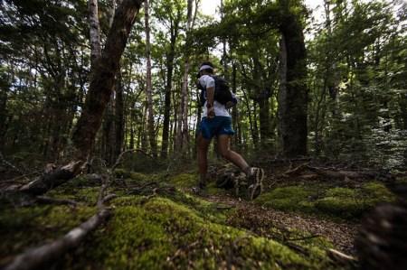 Te Araroa - Jez Bragg - Forêt