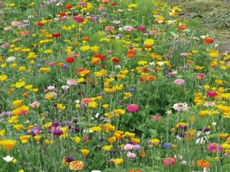 Jachère fleurie