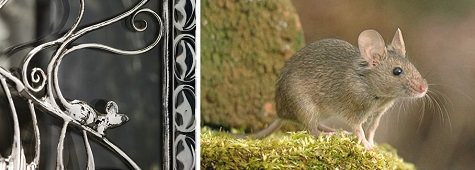 Detail of Wittgenstein Vitrine; Josef Lubomir Hlasek, Mouse, photograph. Sci-news.com. Web. November 24, 2014.