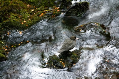 Dillon Anderson's runner up photo - blue duck.