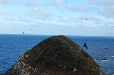 Petrels fill the air above South Meyer Island.