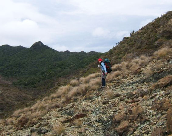 Sacha walking down a steep, tussock covered hillside.