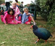 Kids fascinated by takahe up close.