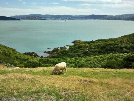 View from Matiu Somes Island.