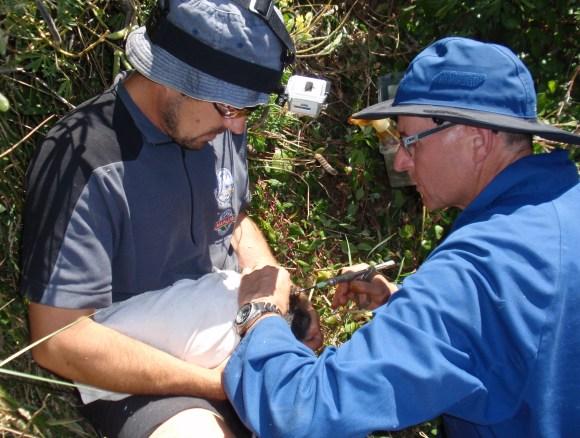 Inserting RFID tag