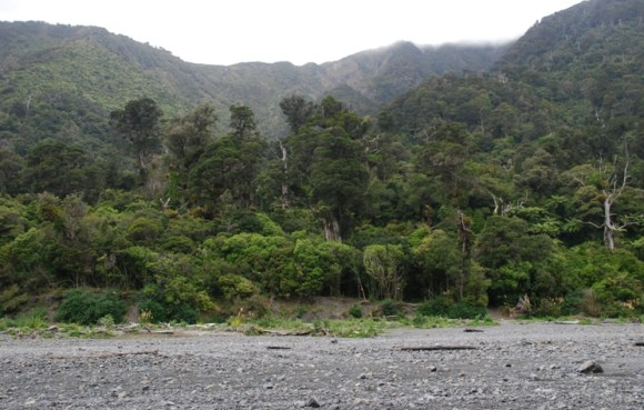 Raukawa hut amongst the trees and beside a river in Rimutaka Forest Park.