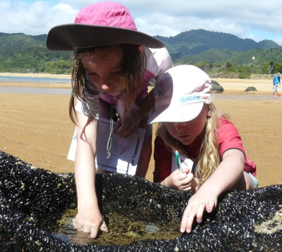 Children investigating the rock pools at Totaranui campground.