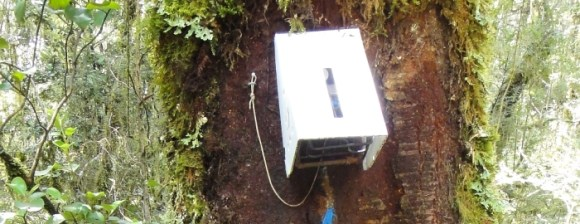 A sentinel trap on the Milford Track.