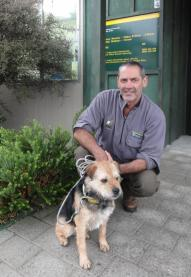 DOC stoat detection dog Crete with handler Scott Theobald outside a DOC office.