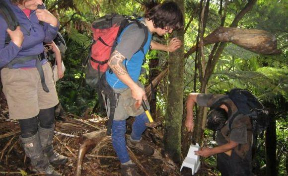 Trapping work at Paraninihi (White Cliffs), Taranaki.