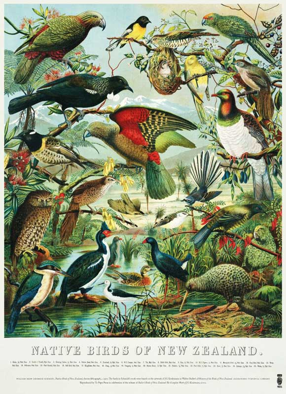 Buller's birds of New Zealand. The poster.