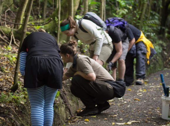 Interns working with a DOC ranger on Kapiti Island.